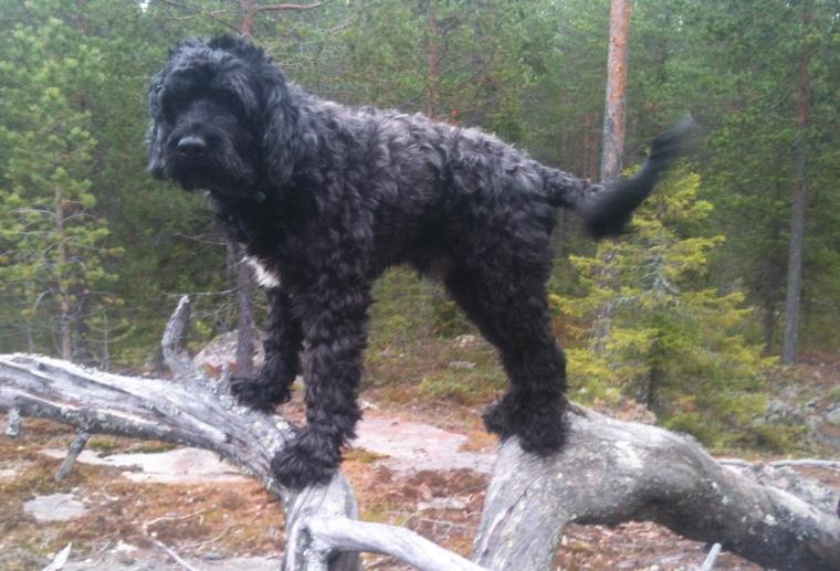 Skogen är bra ställe för att hitta på olika upptåg med hunden.