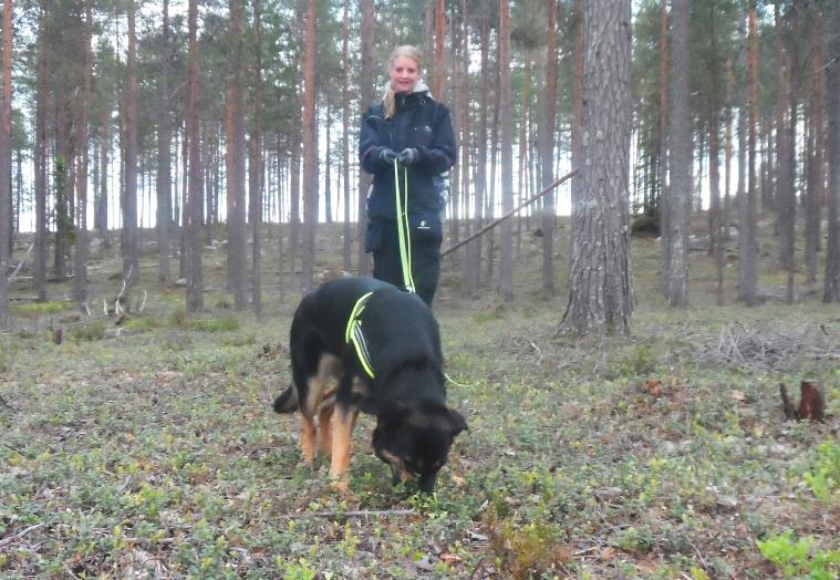 Leah är en intressant blandning mellan schäfer, rottweiler och hovawart.