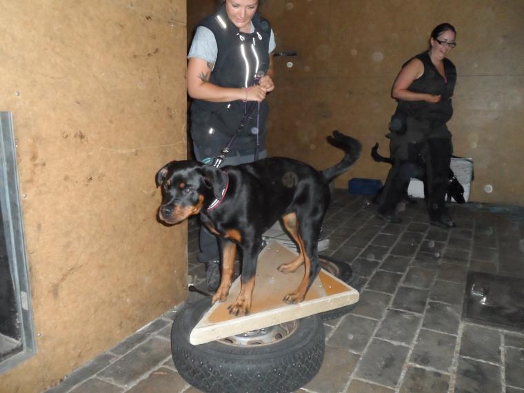 Vi testade bland annat instabila underlag inne i brandmännens övningshus. Här är det Caxa och Moa som tränar.