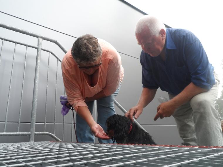 Iris och Göte lockade Rocky uppför trappan.