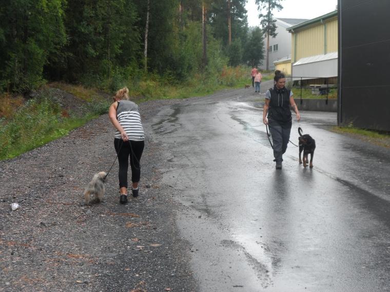 Och så avslutade vi med att träna på hundmöten. Vilka duktiga deltagare!