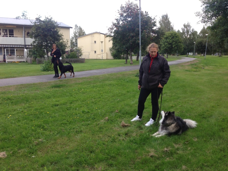 Ozzy och Stina passerar Susanne Ericson och Jackpot utan problem =)