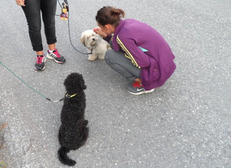 Jobbigt. Matte gosar med en annan hund. Men Prinsen blev bättre och bättre på att behärska sig.
