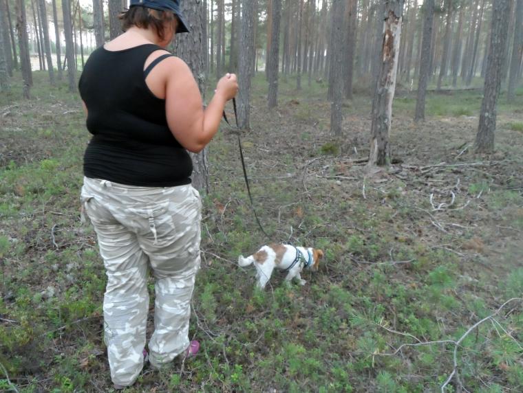 Sicko och Paulina jobbar sig fram i terrängen. På ett ställe kröp Sicko under ett träd för att kunna fortsätta att spåra, det var jättetrångt, men tyvärr hann jag inte fota då.