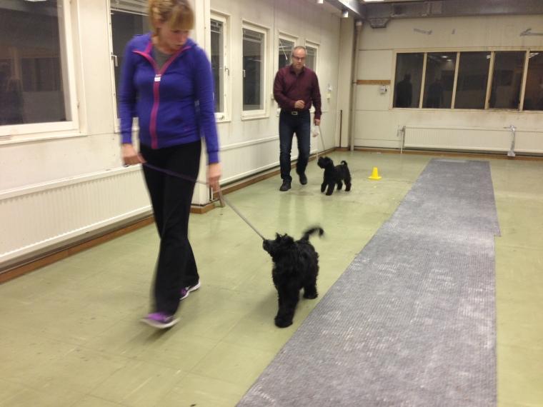 Vi tränade koppelträning. Här är det Maria och Zoe samt Peter och Doris.