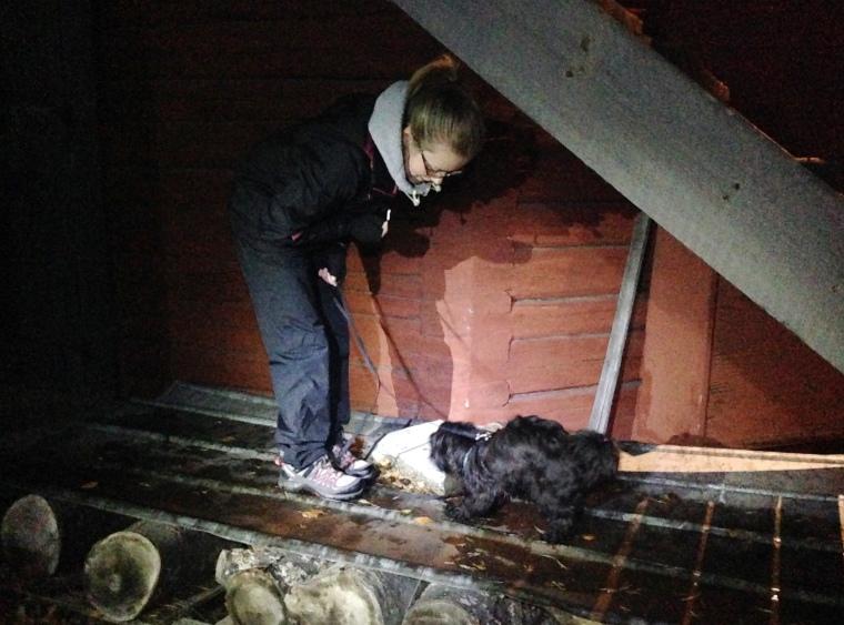 Plåt kan vara läskigt för många hundar att gå på. Här är det Natalie och Svea.
