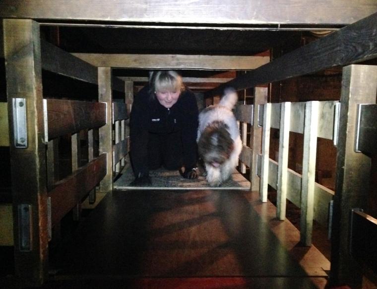 Birgitta och Boston tar sig fram i en labyrint där brandmännen brukar öva.