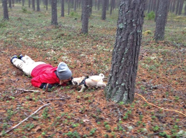Mopsen Signe tyckte skogen var lite stökig. Men när matte gömde sig gick det bättre.