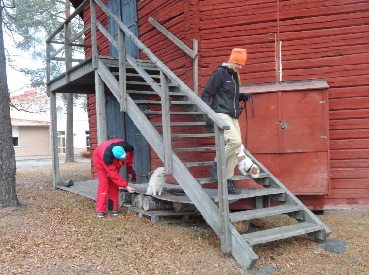 Vi övade även på trätrappor och att gå på plåt.