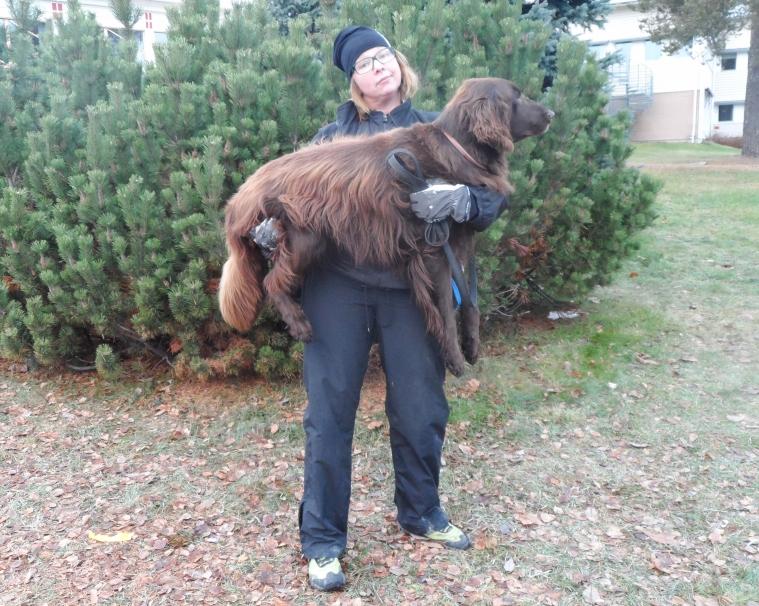 Lätt som en plätt. Yvonne försöker visa med sin min att hunden Reuben knappt väger någonting.