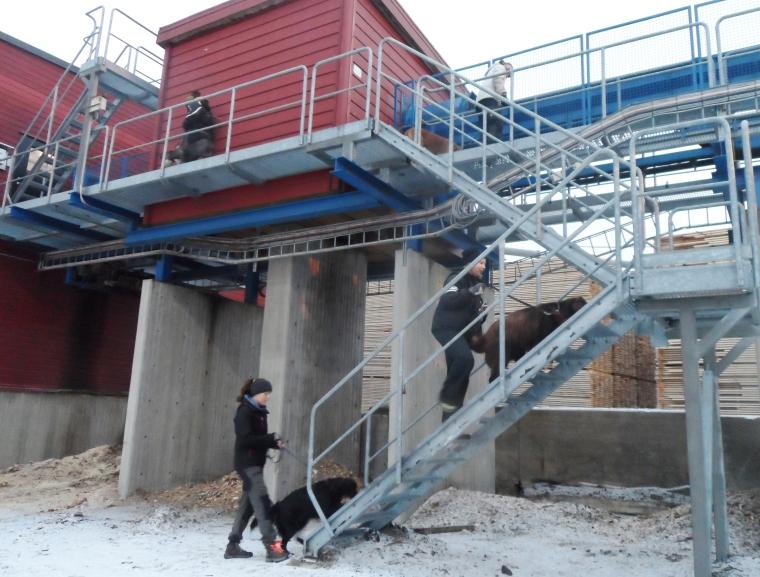 Gallertrapporna var många, höga och läskiga.