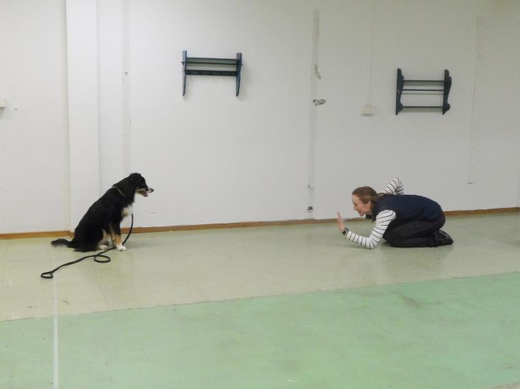 Therese Gustafsson och aussien Diva provade olika retsamma rörelser.