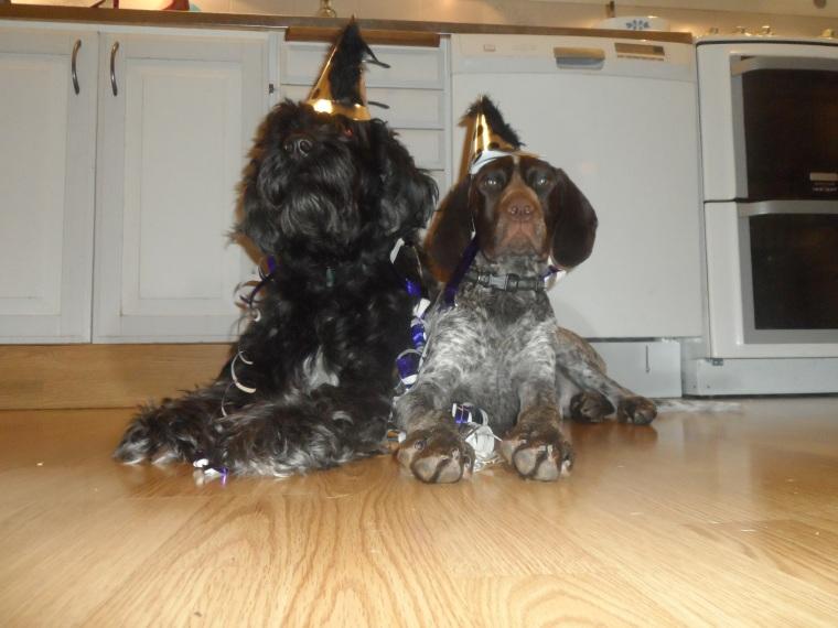 Nyårsfirande. Bör helst ske utan raketer för hundens bästa.