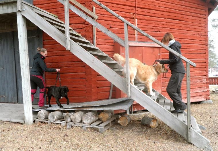 Elin Möller med cane corso Nato och Josefine Nyström med golden retriever Dex jobbade på olika stationer.