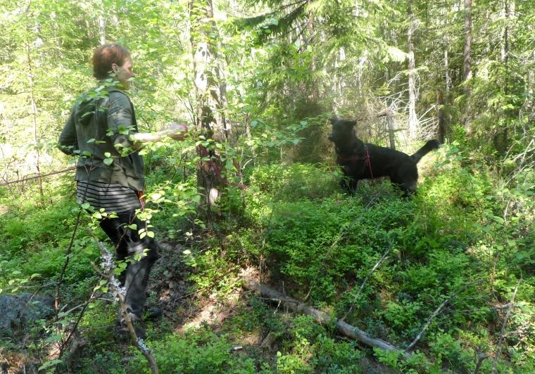 Jag och Snora fick ett tapp i djungeln. Då ser det ut så här.