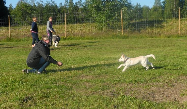 Vilja sprang snabbt till sin matte Evelina Bonerud.