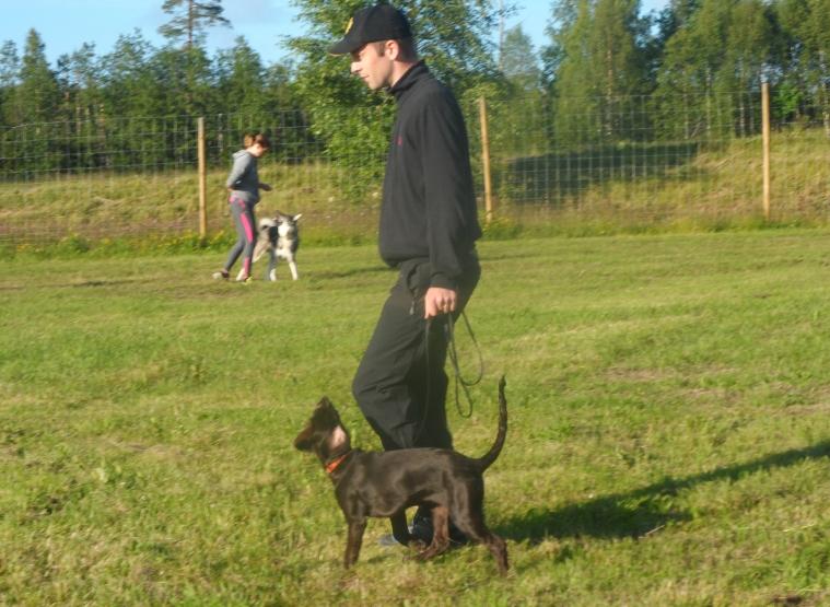 Anders Lindqvist hade fin kontakt med sin wachtel/gråhundsblandning Kiwi.