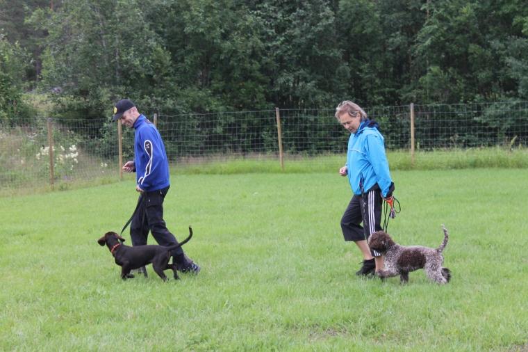 Deltagarna börjar få fin kontakt med sina hundar.