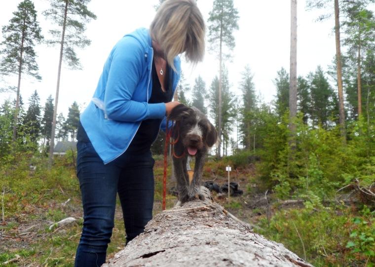 Johanna Åkerlund och strävhåriga vorstehn Märta tränade upp balansen.
