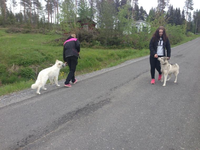 Ett bra tips vid hundmöten: Koncentrera dig helt och fullt bara på din egen hund.